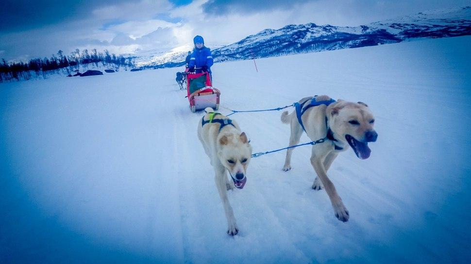 Gustav kjører hund i Sulis (1 of 1)