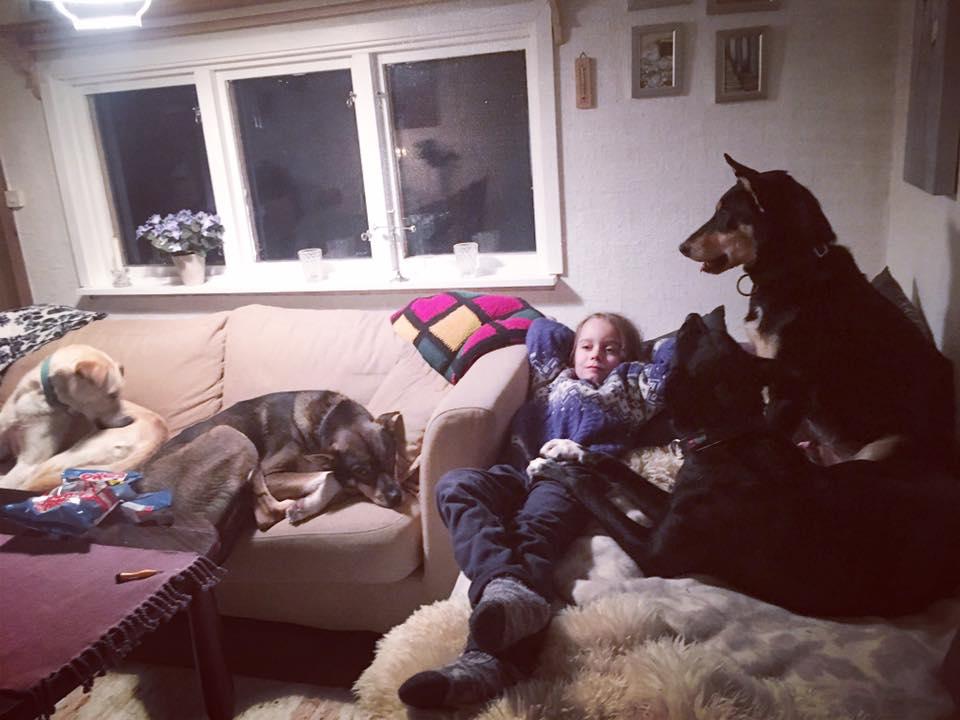 Gustav slapper av etter møtet med elgen